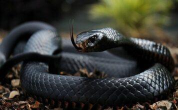snake dream astrology